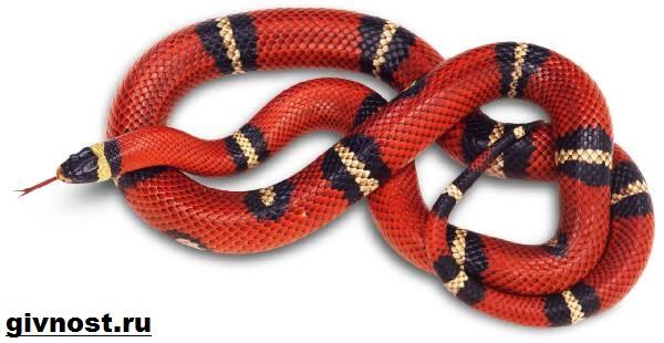 Аспид-змея-Образ-жизни-и-среда-обитания-змеи-Аспид-6