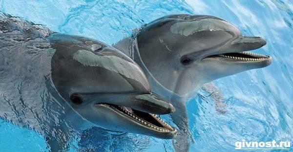 Дельфин-Афалина-его-образ-жизни-и-среда-обитания-1