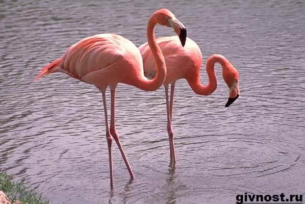 Птицы-Африки-Описания-названия-и-особенности-птиц-Африки-14