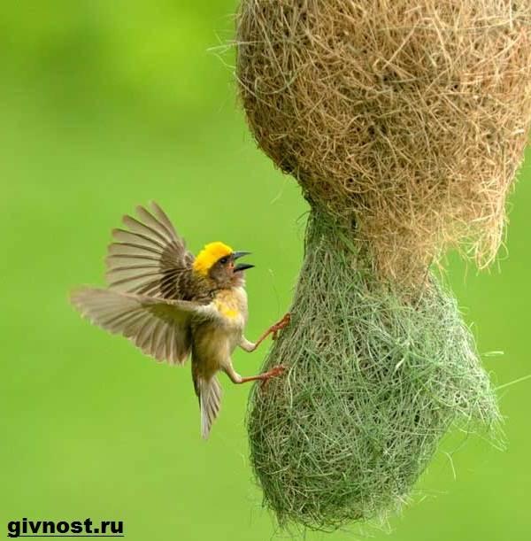 Птицы-Африки-Описания-названия-и-особенности-птиц-Африки-4
