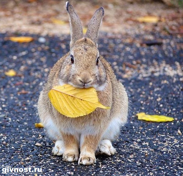 Заяц-русак-Образ-жизни-и-среда-обитания-зайца-русака-10