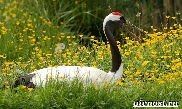 Животные-Японии-Описание-названия-и-особенности-животных-Японии-16
