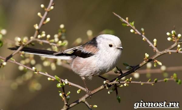 Животные-Японии-Описание-названия-и-особенности-животных-Японии-18