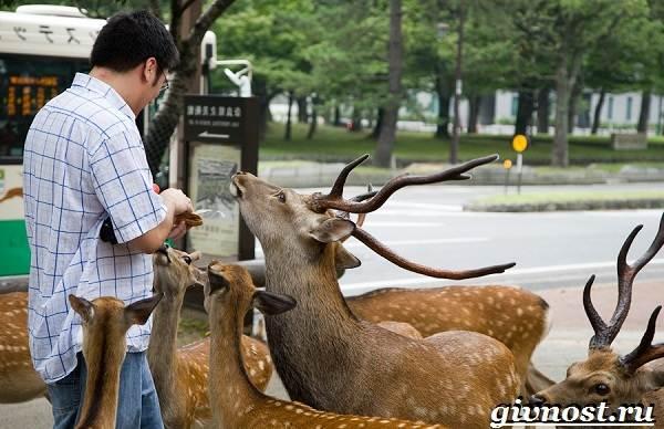 Животные-Японии-Описание-названия-и-особенности-животных-Японии-2
