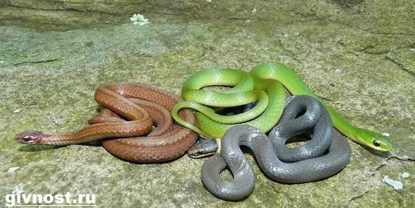 Змеи-Красной-книги-России-1