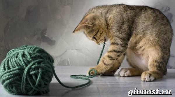 Редкие-породы-кошек-их-описание-и-особенности-1