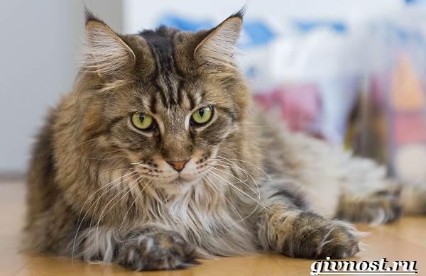 Редкие-породы-кошек-их-описание-и-особенности-10