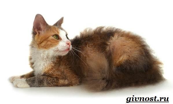 Редкие-породы-кошек-их-описание-и-особенности-11