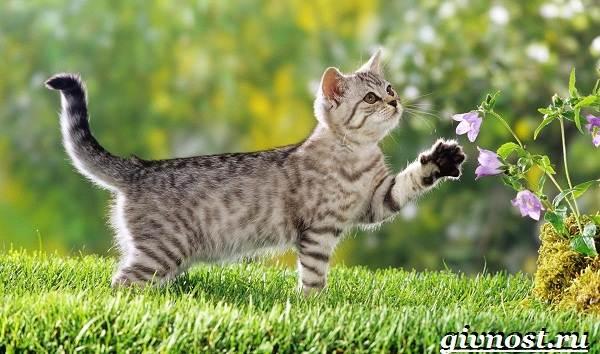Редкие-породы-кошек-их-описание-и-особенности-2