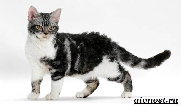 Редкие-породы-кошек-их-описание-и-особенности-3