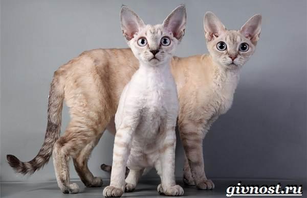 Редкие-породы-кошек-их-описание-и-особенности-4