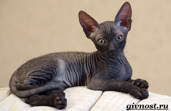 Редкие-породы-кошек-их-описание-и-особенности-5