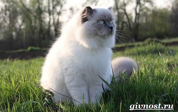 Редкие-породы-кошек-их-описание-и-особенности-6