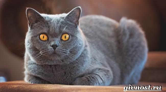 Редкие-породы-кошек-их-описание-и-особенности-9