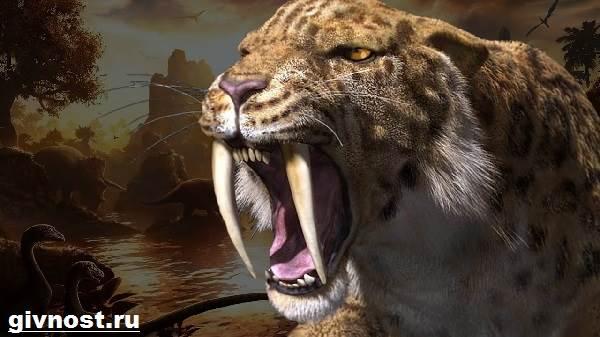 Саблезубый-тигр-Описание-особенности-и-среда-обитания-саблезубых-тигров-6