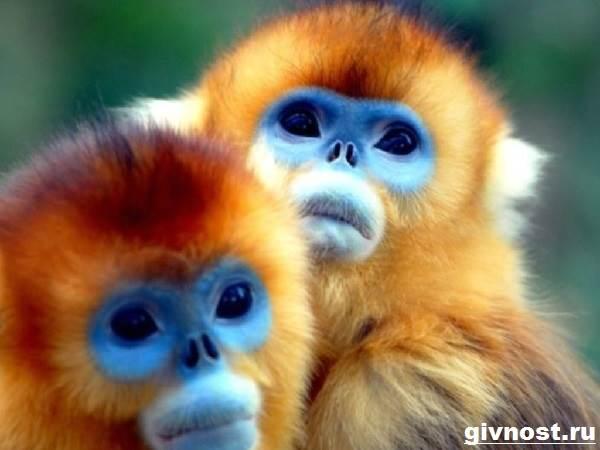 Животные-Китая-Описание-названия-и-виды-животных-Китая-25