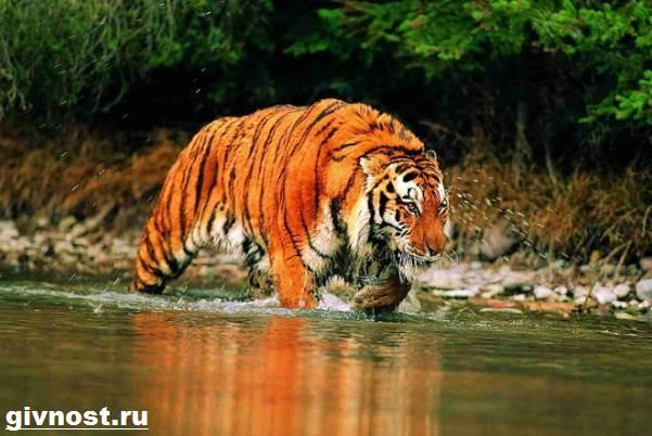 Животные-Китая-Описание-названия-и-виды-животных-Китая-27