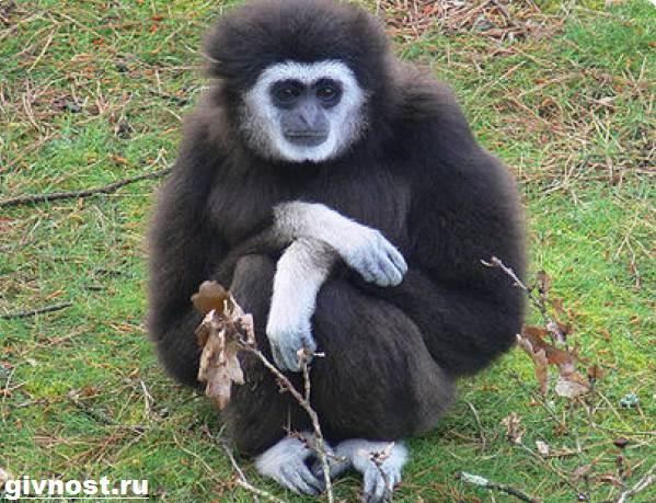 Животные-Китая-Описание-названия-и-виды-животных-Китая-29