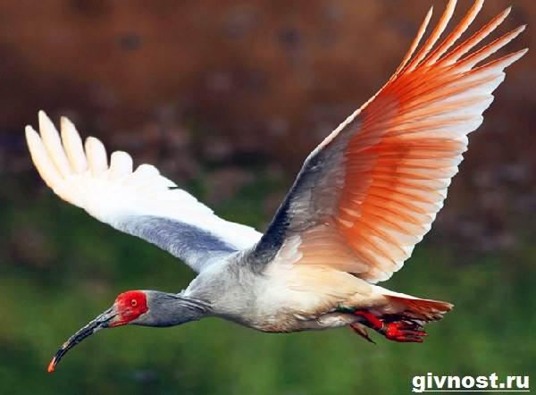 Животные-Китая-Описание-названия-и-виды-животных-Китая-3