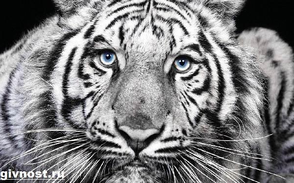 Животные-Китая-Описание-названия-и-виды-животных-Китая-9