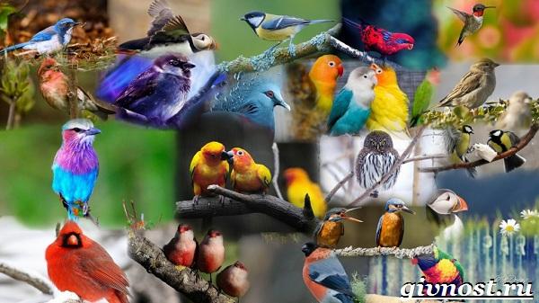 Птицы-Красной-книги-России-1