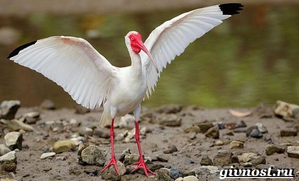 Птицы-Красной-книги-России-15