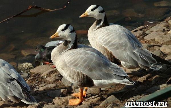 Птицы-Красной-книги-России-18