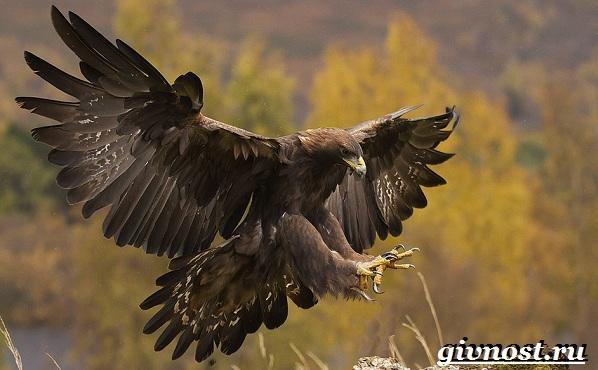 Птицы-Красной-книги-России-25