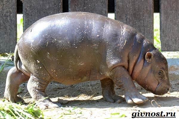 Животные-Африки-Описание-и-названия-животных-Африки-1