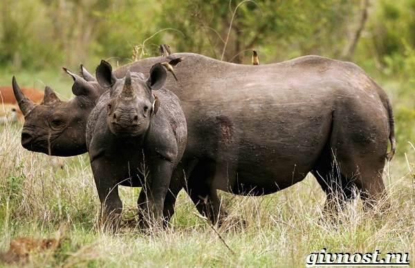 Животные-Африки-Описание-и-названия-животных-Африки-11