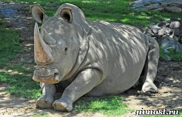 Животные-Африки-Описание-и-названия-животных-Африки-12