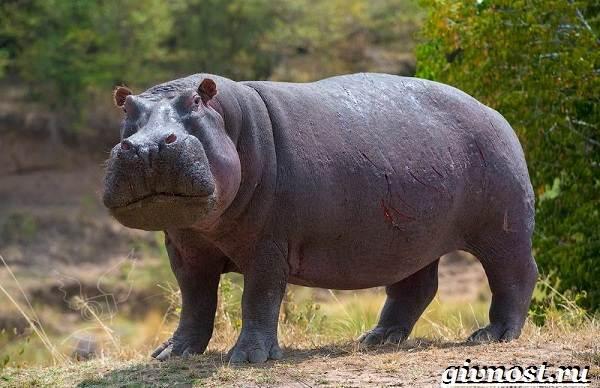 Животные-Африки-Описание-и-названия-животных-Африки-13
