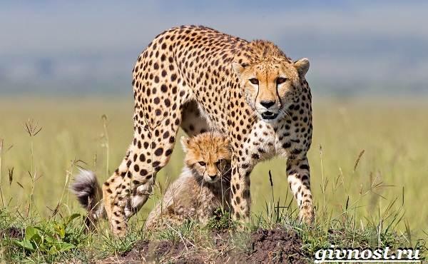 Животные-Африки-Описание-и-названия-животных-Африки-15