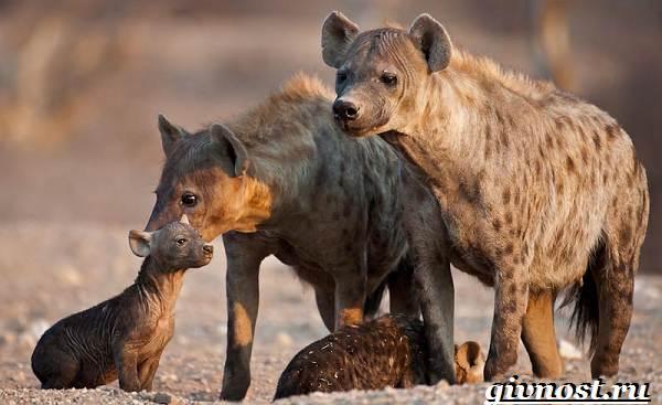 Животные-Африки-Описание-и-названия-животных-Африки-20