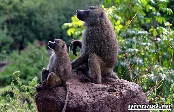 Животные-Африки-Описание-и-названия-животных-Африки-24