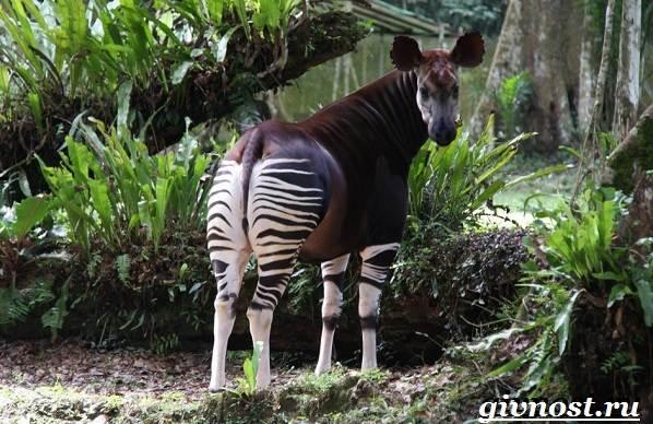 Животные-Африки-Описание-и-названия-животных-Африки-27