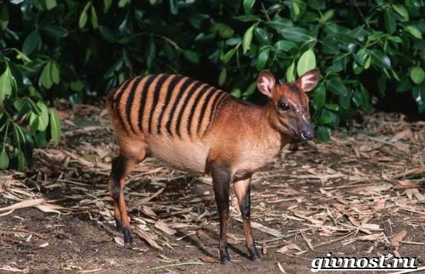 Животные-Африки-Описание-и-названия-животных-Африки-28