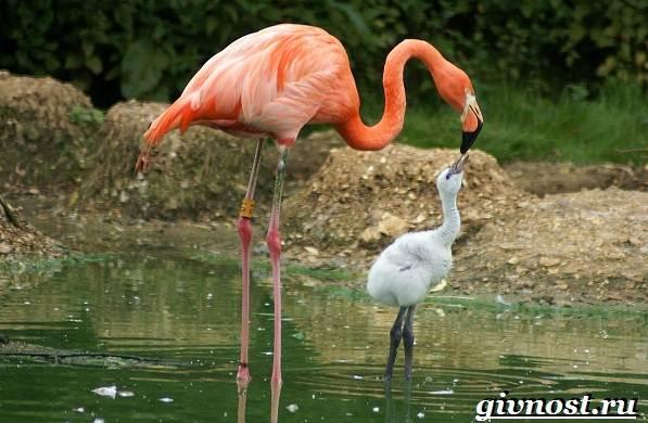Животные-Африки-Описание-и-названия-животных-Африки-33