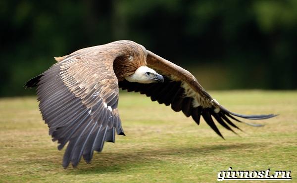 Животные-Африки-Описание-и-названия-животных-Африки-39