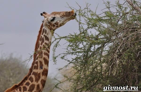 Животные-Африки-Описание-и-названия-животных-Африки-9