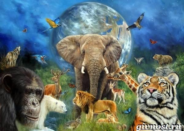 Животные-Африки-Описание-и-названия-животных-Африки