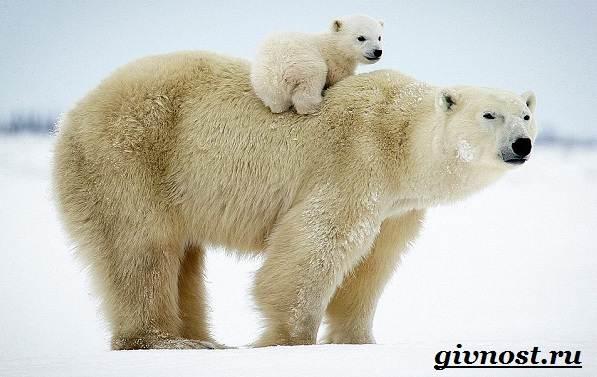 Животные-Красной-книги-России-10