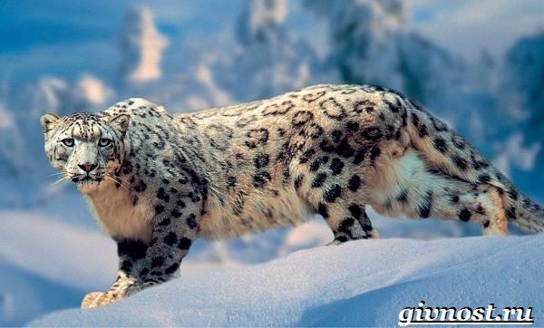 Животные-Красной-книги-России-37