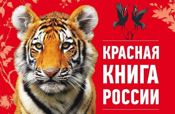 Животные-Красной-книги-России