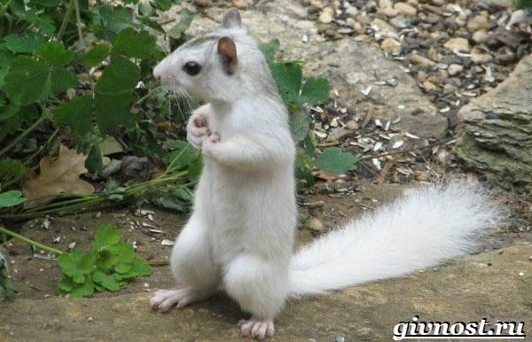 Бурундук-животное-Образ-жизни-и-среда-обитания-бурундука-4