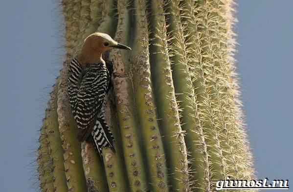 Дятел-птица-Образ-жизни-и-среда-обитания-птицы-дятел-3