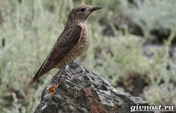 Дятел-птица-Образ-жизни-и-среда-обитания-птицы-дятел-4