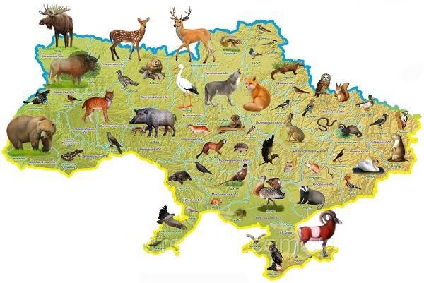 Животные-Украины-Описание-названия-и-особенности-животных-Украины-1