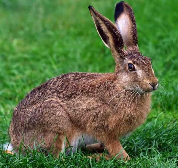Животные-Украины-Описание-названия-и-особенности-животных-Украины-4
