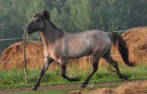 Черная-книга-животных-Животные-занесённые-в-черную-книгу-29
